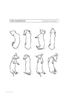 Dachshund Sleep Study Art Print. Illustrations of my pet dachshund's sleeping…