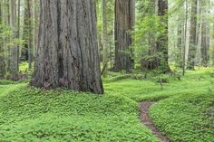 by Jaynes Gallery : State Parks, Humboldt Redwoods State Park, Frame Shop, Digital Technology, Photographic Prints, Find Art, Framed Artwork, Life Is Good, Around The Worlds