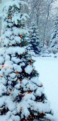 Lots of snow here in Lake Orion, Michigan. U.S (by KT of Lake Orion on Flickr) Christmas Scenes, Noel Christmas, Merry Little Christmas, Country Christmas, Winter Christmas, Christmas Lights, Outdoor Christmas, White Christmas Snow, Christmas Garden