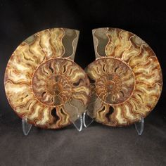 LOTS OF YELLOW CALCITE - Large Ammonite Pair  - Madagascar   - Enter the Earth