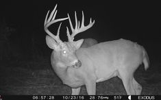 5 Ways To Kill Nocturnal Bucks Whitetail Deer Hunting, Quail Hunting, Deer Hunting Tips, Archery Hunting, Hunting Stuff, Whitetail Bucks, Archery Bows, Turkey Hunting Season, Bow Hunter