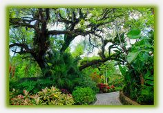 Florida landscaping | Florida Landscaping Work | Flickr - Photo Sharing!