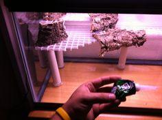 10 Gallon Paludarium Build - Aquarium Advice - Aquarium Forum Community
