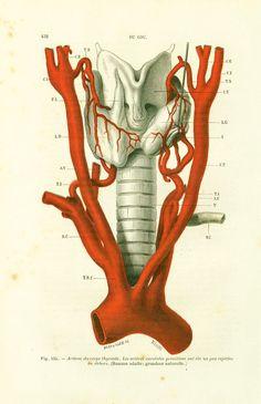 118 years old. Original antique print (not a copy) edited by Faculté de Medecine de Paris France in 1897.  Leaf size is aprx : 17cm x 26cm (6.6 in x 10.2 inches)  Condition... #surgery #tillaux #thyroïd #neck #dissection