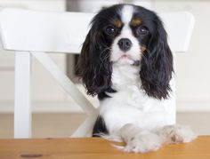 The Dangers Of Feeding Pets Table Scraps