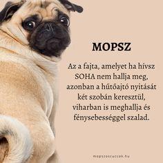Dogs, Doggies, Pet Dogs, Dog