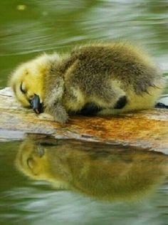 #Sleep