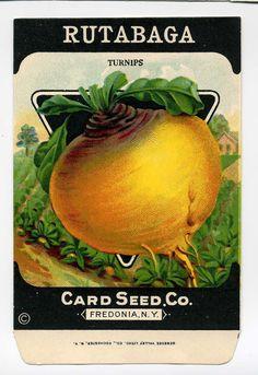 Vintage Seed Packet Rutabaga Colorful by VintageVendor on Etsy, $3.50