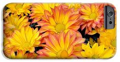 Flower IPhone 6s Case featuring the photograph Flower by Gandz Photography