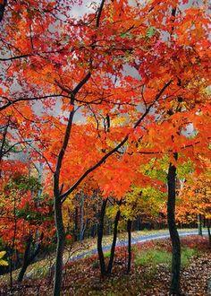 Fall at Bent Tree in Jasper, Georgia in the beautiful North Georgia Mountains