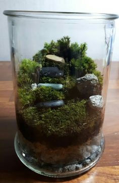 Moss Terrarium Bottle/Glass Terrarium Terrarium Tank, Moss Terrarium, Garden Inspiration, Garden Ideas, Bottle Garden, Miniatures, Fairy Gardens, Hobbit, Glass