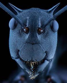 """black ant"". #ant #macroart #macro_art_ind #macro_art #macro #macro_x #macrophotography #macronusantara #macroindonesia #top_macro…"