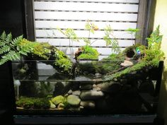 Home Aquarium, Nature Aquarium, Aquarium Design, Aquarium Fish Tank, Planted Aquarium, Glass Aquarium, Terrariums, Orchid Terrarium, Terrarium Ideas