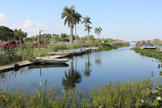 Everglades, Ft. Lauderdale, USA by Tina Bardenfleth
