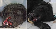Justice For Patrick! Friendly Stray Dog Attacked And Abandoned Severely Injured To Perish!
