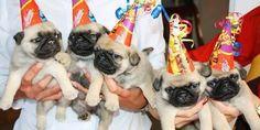 Fiestas para perros | Handspire