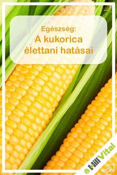 Számtalan vitamint (a-, b1-, b2-, b3-, b6- és c- vitamin) tartalmaz a kukorica nagy mennyiségben. Kisebb arányban tartalmaz még e-vitamint is, mivel ez is elengedhetetlen a szervezet számára.   Különösen a b1- vitamin tartalma miatt szokták ajánlani a kukorica fogyasztását amit boldogságvitaminként is szoktak nevezni. A rendszeres fogyasztásával javul a kedélyállapot, és még a depresszió kialakulásának az esélye is kisebb. Vegetables, Food, Essen, Vegetable Recipes, Meals, Yemek, Veggies, Eten