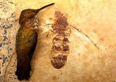Just how big were some prehistoric insects?