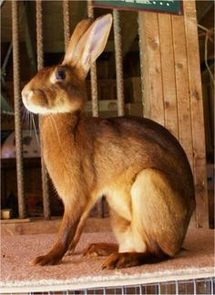 the Rabbit and Cavy Breeders Ind