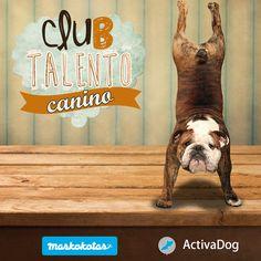 Nueva Edición Club Talento Canino en Maskokotas, ¿Te apuntas?