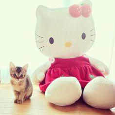 Hello Kitties #cats #kittens