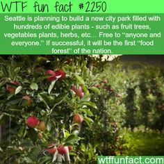 Seattle Fruit forest - WTF fun facts- i feel that people would turn it into a source of profit an pick a whole bunch to sell them off.... if it works that great