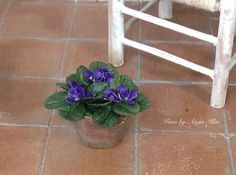 Miniature African violet. Dollhouse flower plant. by MinisbyAngie