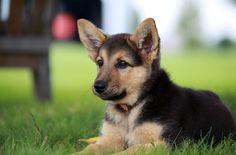 cute dog - Pesquisa Google