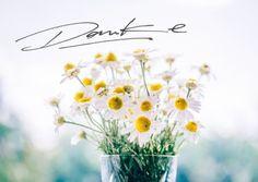 Danke Postkarte Motiv mit Gänseblümchen im Glas vor unscharfem Hintergrund handgeschrieben