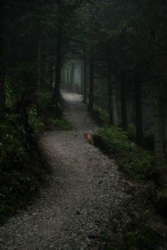 Beautiful walk into the dark woods