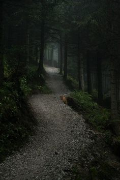 Beautiful walk into the dark woods