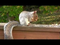 ▶ Video for your cats - Squirrels and Chipmunks - YouTube