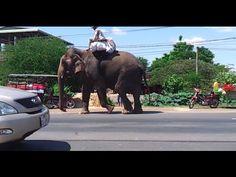 Big elephent in khmer