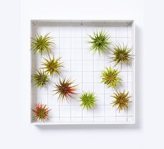 2015 Gift Guide: New Homeowner  Airplantframe Vertical Garden  $110  A creative way to add greenery to your home by way of a vertical garden frame which eliminates the need for soil.