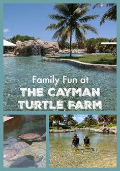 Review of the Cayman Turtle Farm