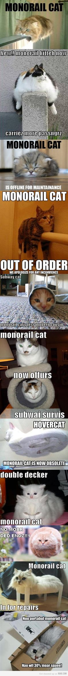 Funny pictures about Monorail Cats. Oh, and cool pics about Monorail Cats. Also, Monorail Cats. Cute Funny Animals, Funny Animal Pictures, Funny Cute, Cute Cats, Hilarious, Funny Pics, Funny Stuff, Crazy Cat Lady, Crazy Cats