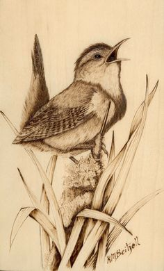Wood-Burning Art Gallery | Marsh wren woodburning
