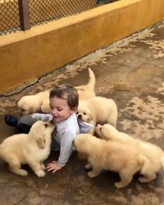 I wish I wish I wish that I could be that lucky kid [Video] Cute Baby Videos, Cute Animal Videos, Funny Animal Pictures, Cute Funny Animals, Cute Baby Animals, Animals And Pets, Funny Babies, Funny Dogs, Cute Babies