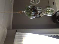 Terrarium and air plant in baby nursery.