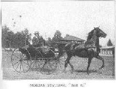 Bob B, uno de primeros sementales tipo Lippitt que contribuyó a la raza American Morgan Horse