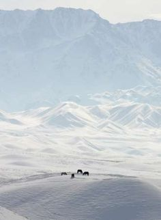 Horse Herd, Kyrgyzstan [REUTERS 2006-02-05]; Image ONLY