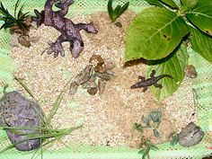 Creative Playhouse: Small World - Reptiles! Create a play tub for your preschooler to foster imagination.