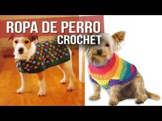 Captivating All About Crochet Ideas. Awe Inspiring All About Crochet Ideas. Corgi Dog, Pet Dogs, Dog Cat, Pet Clothes, Sewing Clothes, Cat Sweaters, Love Crochet, Crochet For Beginners, Crochet Animals