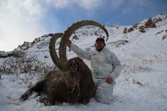 """Just because Kyrgyzstan end in """"stan"""" doesn't mean you wont make it back alive. Ibex hunting is incredible! This was an unbelievable Mid-Asian ibex and Marco Polo hunting experience of a lifetime! Bow Hunting Deer, Big Game Hunting, Ibex Goat, Hunting Outfitters, Nature Hunt, Fish Camp, Bald Eagle, Wildlife, Hunts"""