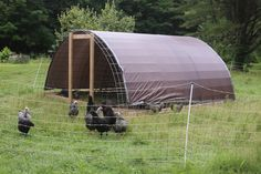 Hoop House for chickens or other livestock