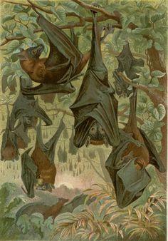 1894 Creepy Antique Bat Print Bat Wall by AntiquePrintBoutique
