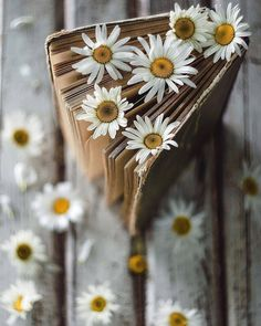 Image uploaded by ackrus. Find images and videos about flowers and book on We Heart It - the app to get lost in what you love. Book Aesthetic, Flower Aesthetic, Aesthetic Pictures, Book Wallpaper, Flower Wallpaper, Book Photography, Creative Photography, Photography Flowers, Book Flowers