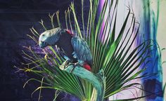 Star of the show.  @playwithtoy  #africangrey #parrot #bird #putabirdonit by ninalaviva http://www.australiaunwrapped.com/