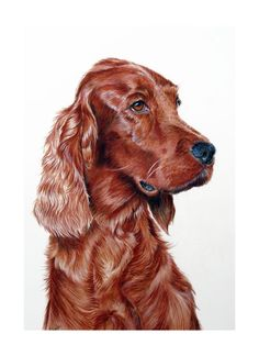 Gayle Mason Fine Art: Paintings and Giclee prints of Dogs By Gayle