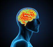 Scientists identify brain's 'molecular memory switch'